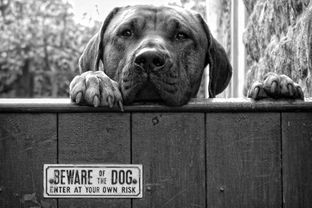 beware-of-the-dog