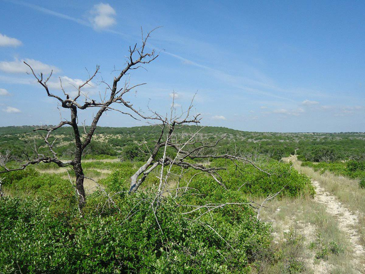 Countryside view - South Llano